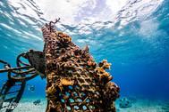 cozumel dive corals.jpg