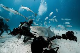 shark photo mx.jpg