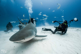 uw photographer sharks.jpg