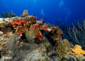 reef riviera maya.jpg