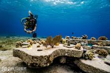 coral farm mx.jpg