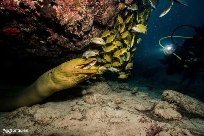 eel dive pdc.jpg