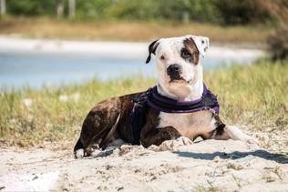 perro foto cancun.jpg