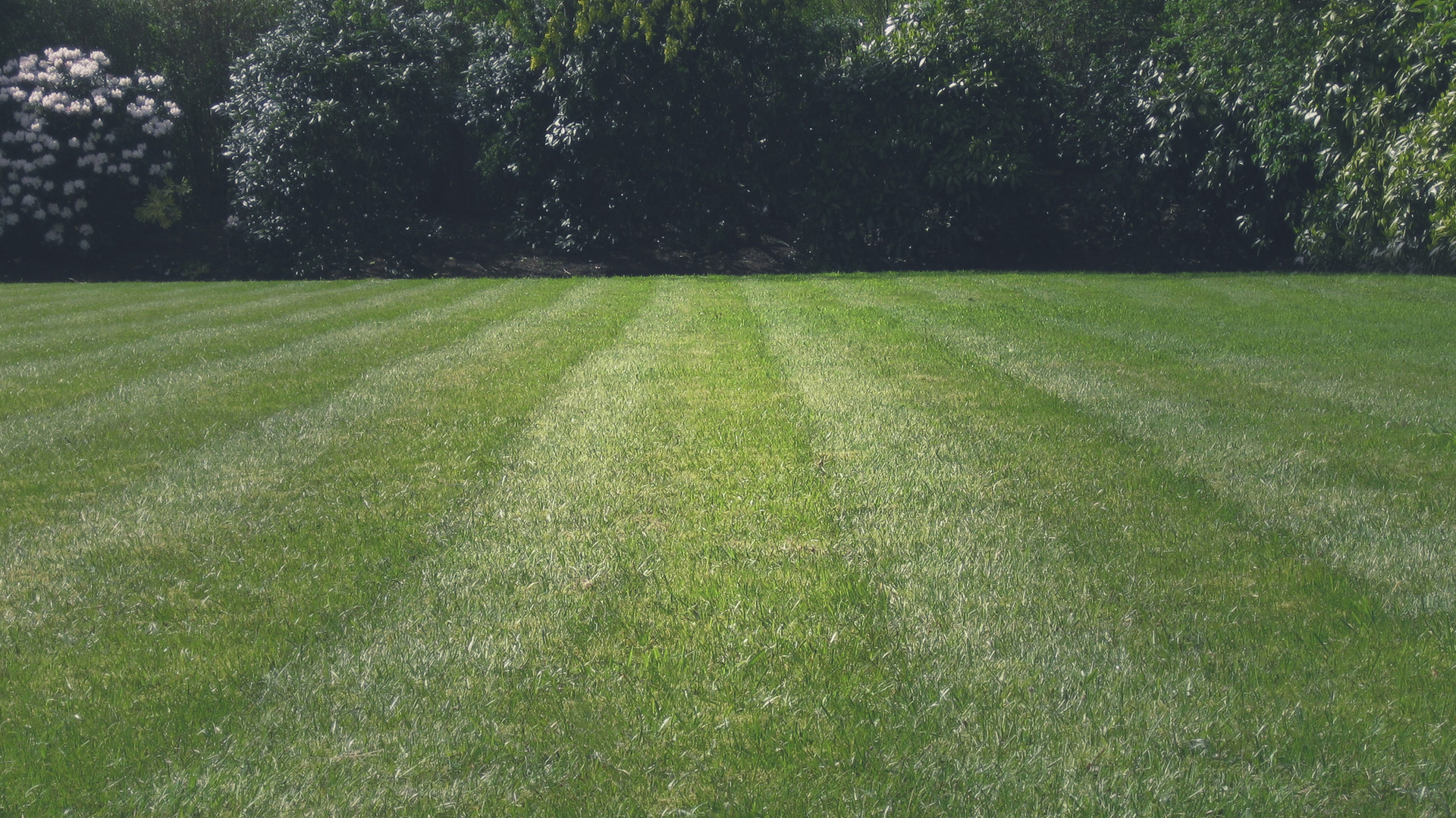 Gras maaien