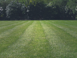 Revived Lawn