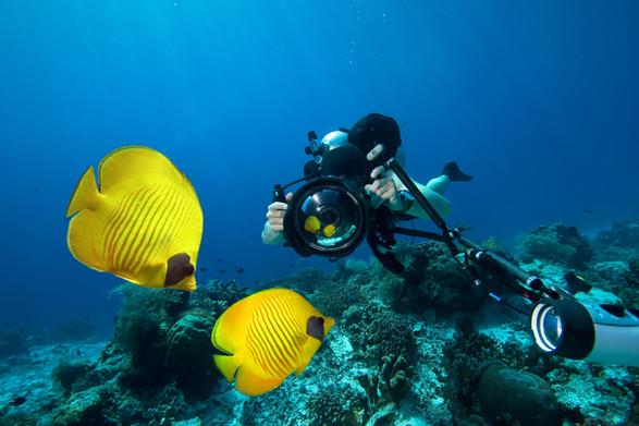 Scuba diver filming two fish
