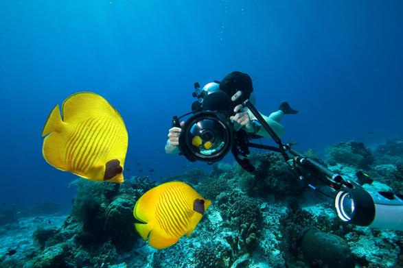 Scuba diver filming two fish