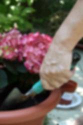 садовник, лопатка для сада, высадка цветов, озеенение, цветы
