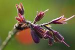 phytotherapie, heilpflanzen, spagyrik, praxis lamarra, schüssler salze,