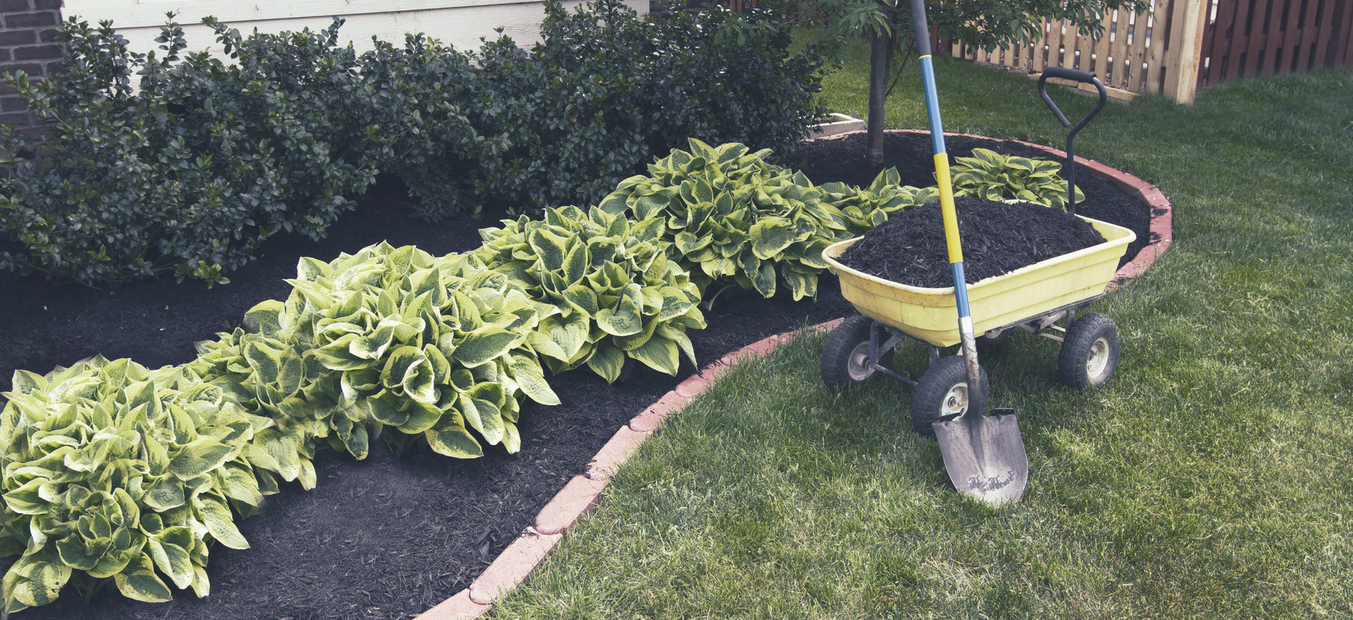 Completed border and mulch with new plants!
