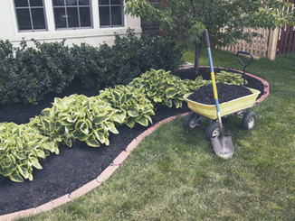 Weeding and Mulching