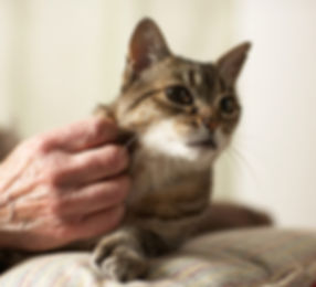 Image of hand petting a cat.