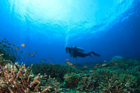 Scuba diver underwater with fish
