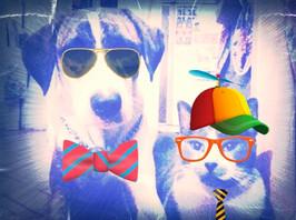 dog cats.jpg
