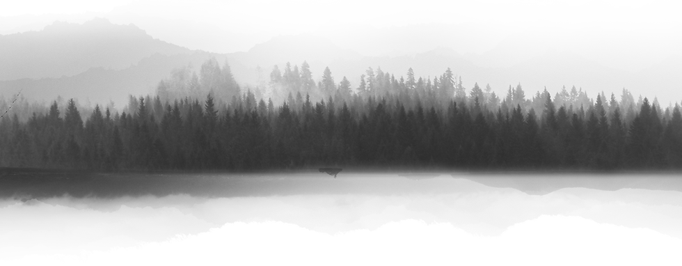 Photo of a forest. The photo is grayscale and features many pines in front of a mountain range. The landscape is reflected by a body of water at the edge of the tree line.