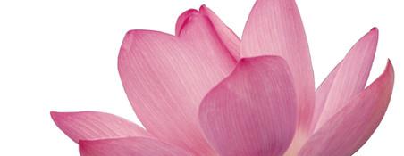 Blume als Symbol für Gesundheit