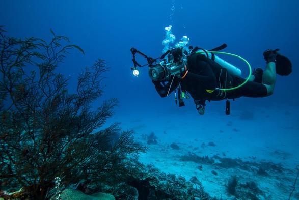 Scuba diver with corals