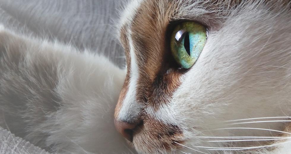 AMC pensive cat