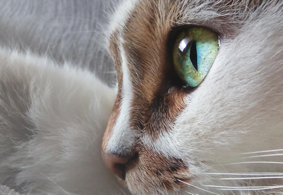 Die Augen einer Katze sind Fenster die uns in eine andere Welt blicken lassen.