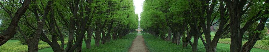 trees_crop.jpg