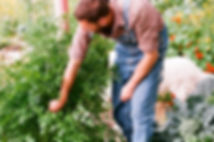 Lawn, Lawn care, Lawn Mowing, Mowing, Mulching, Fertilizing, Aeration, Core Aeration, Leaf, Leaf Removal, Brush Removal, Seeding, Thatching, Sodding, Pruning, Tree Removal, Landscaping, Planting, Stump Grinding, Weeding, Trimming, Bed / Landscaping Design