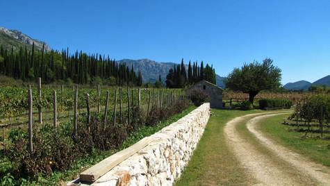 Croatia wine country.jpg