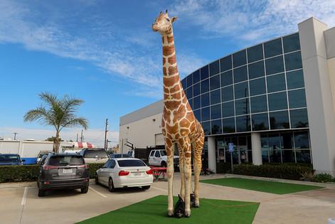 inflatable-giraffe-prop.JPG