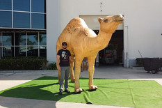 giant-inflatable-camel.JPG