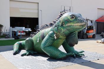 inflatable-iguana.JPG