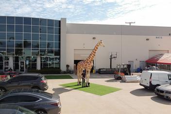 giraffe-safari-inflatable.JPG