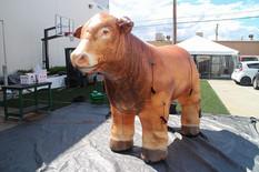 beef-cow-inflatable.JPG