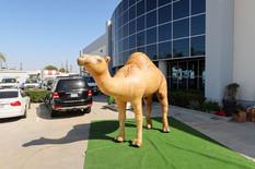 inflatable-desert-animals.JPG