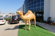 camel-inflatable.JPG