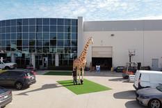 giant-giraffe-inflatable.JPG