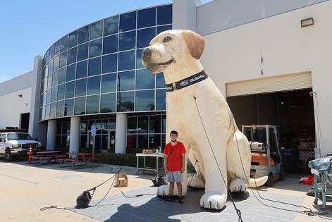 inflatable-dog.JPG