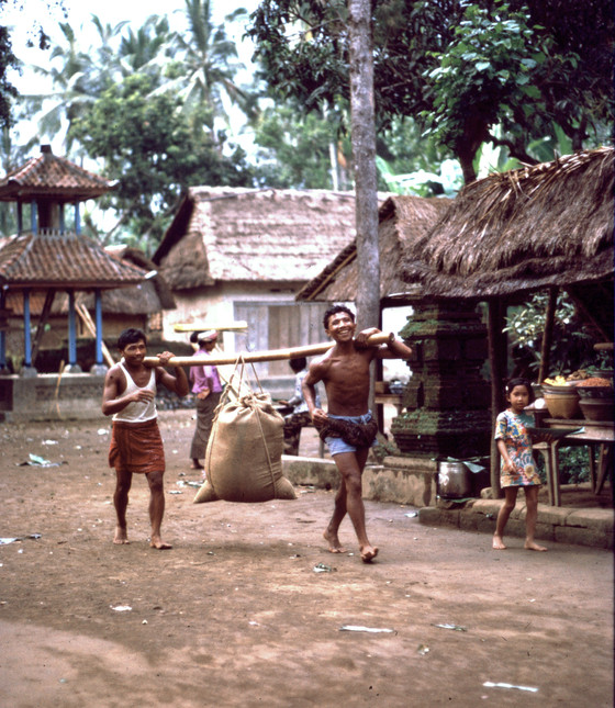 Carry rice to market