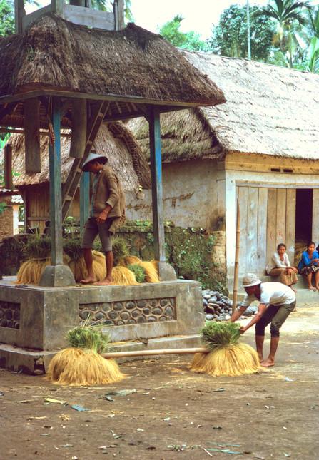 Organizing the harvest