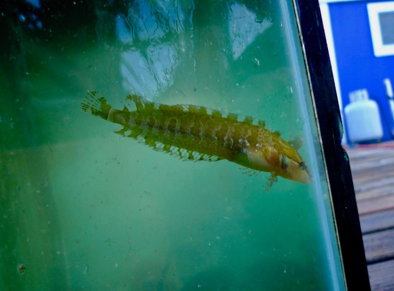 Aquatic Life 1 Ohta.jpeg