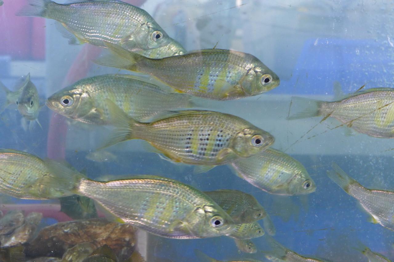 Aquatic Life 6 Ohta.jpeg