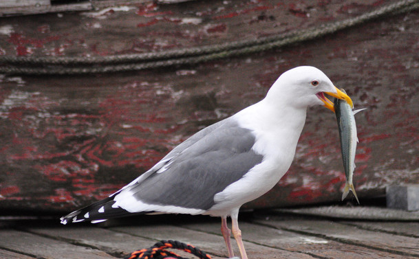 Birds 13 Ohta.jpeg