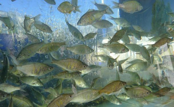 Aquatic Life 12 Ohta.jpeg