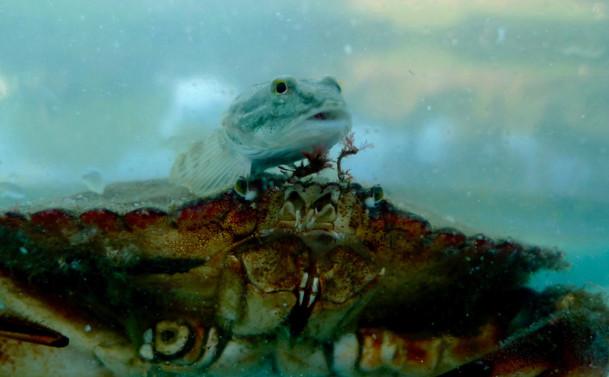 Aquatic Life 3 Ohta.jpeg