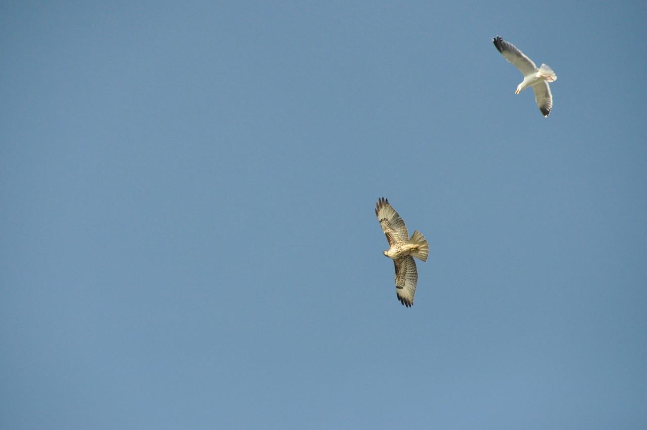Birds 6 Ohta.jpeg