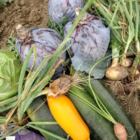 Der eigene Gemüsegarten - kann ich das auch?