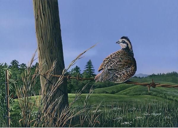 quail 3.JPG
