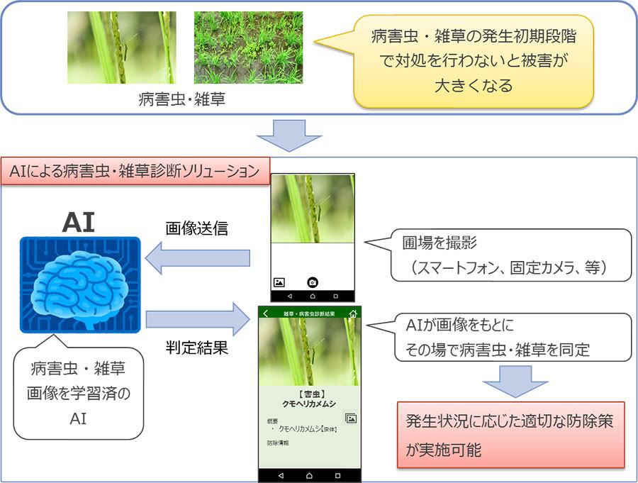 「病害虫・雑草診断ソリューション」のイメージ