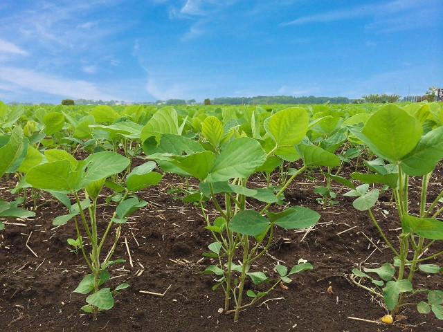 野菜の生育状況