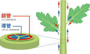 植物体内で効果を発揮