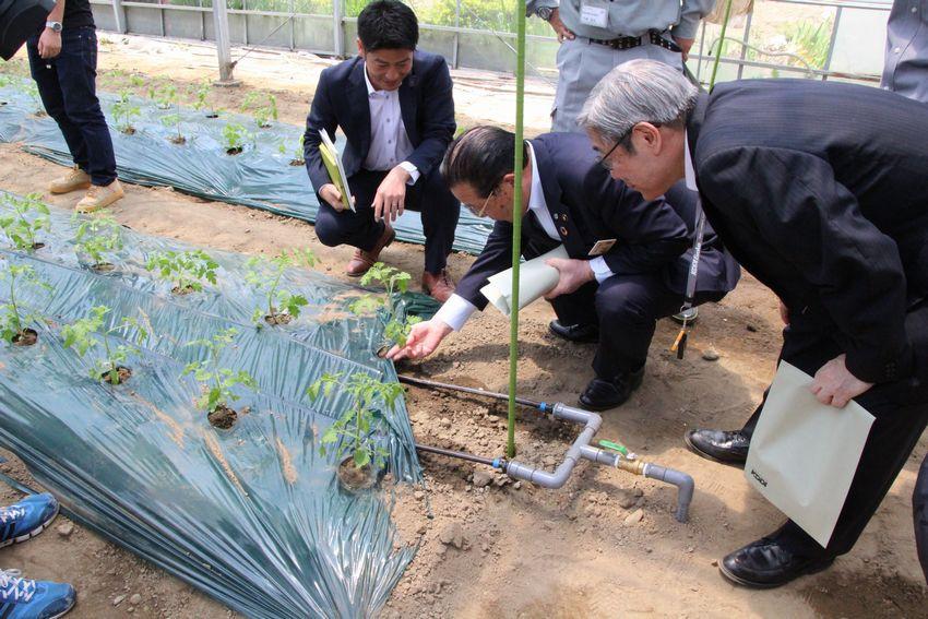 「ゼロアグリ」から点滴チューブを通して、水と肥料が供給されている様子