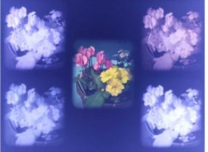 マルチスペクトルPiTOMBOによる植物撮影例。異なる4波長の近赤外画像とRGB画像の5眼画像が1ショットで撮影できる